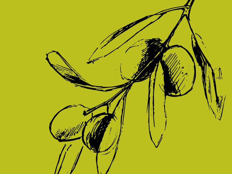 Bernard olio logo design bozzetto